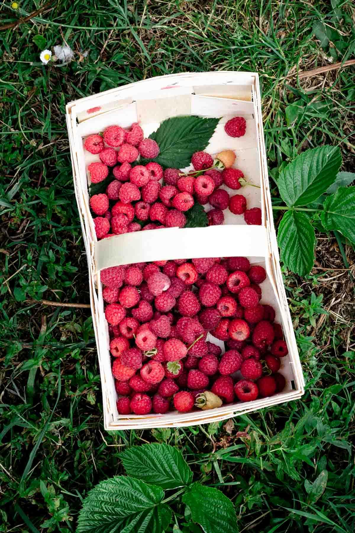Basket with freshly picked raspberries #summerberries #raspberries | via @annabanana.co