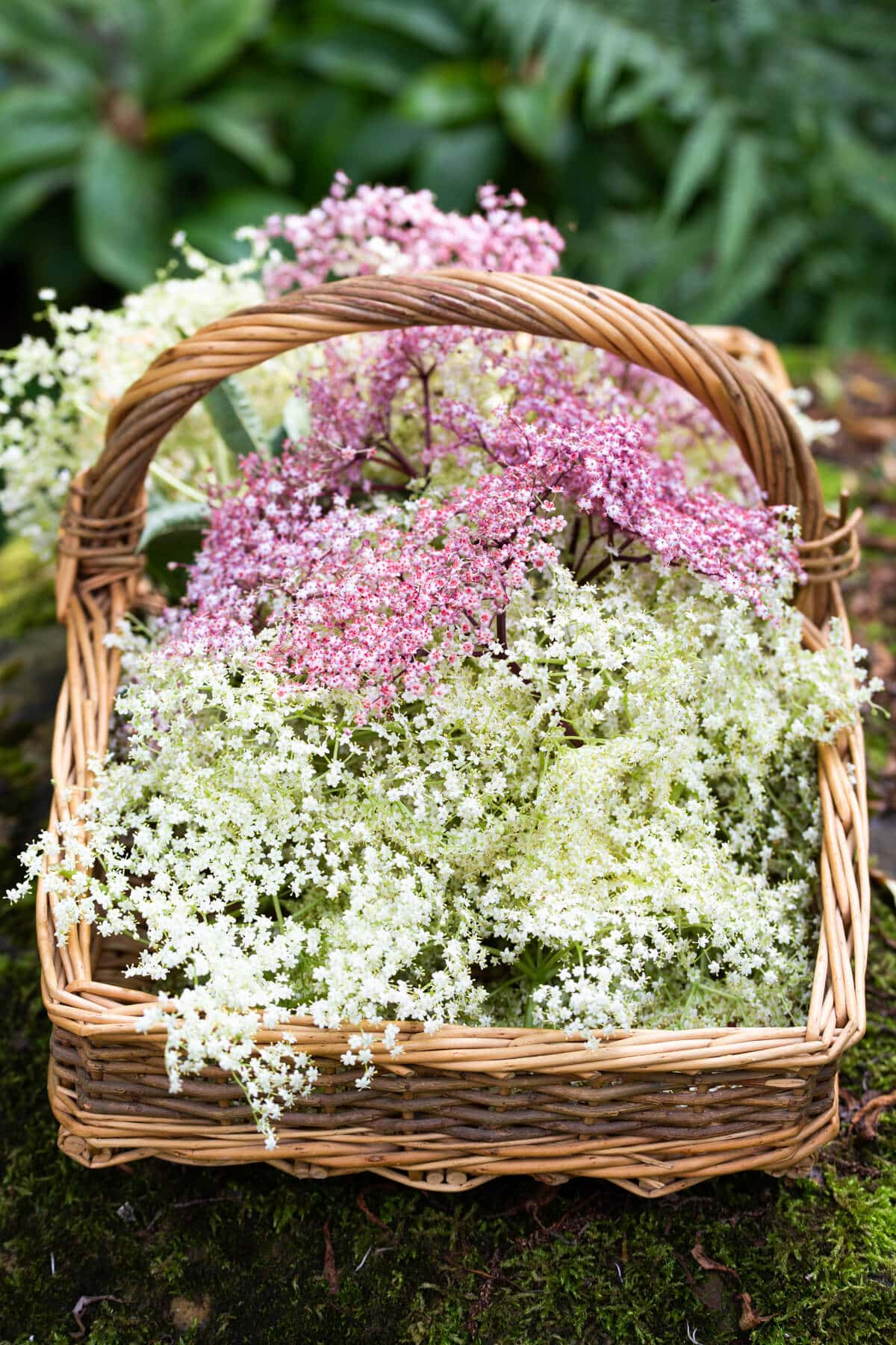 side angle view of a basket filled with elderflowers